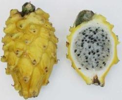 250px-yellow_pitaya