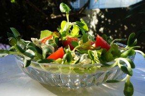 Salada de Broto de Girassol