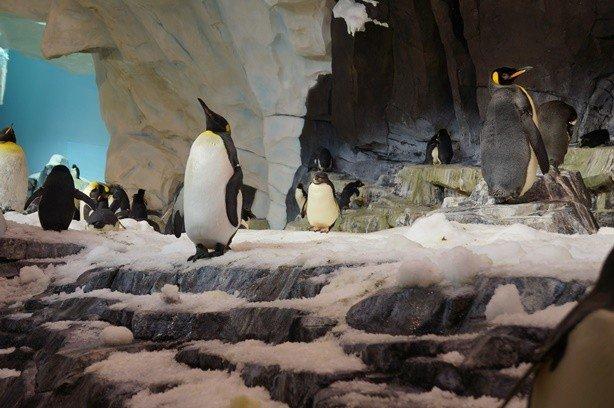 Sea Pinguim