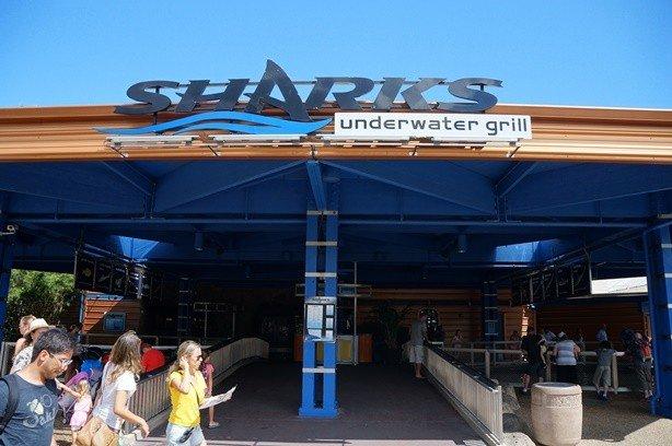 Sea Shark