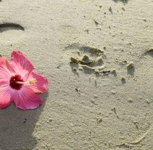 Casa da praia – Dia 16 – Karoline Nogueira