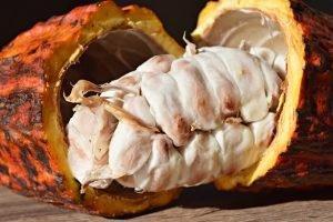 Cacau – Como aproveitar esta fruta tão especial